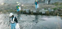 女鳥羽河川清掃